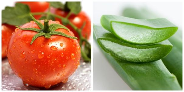 nha đam và cà chua
